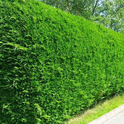 Les Arbustes De La P 233 Pini 232 Re Les Jardins De Burnhaupt